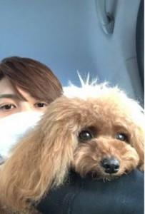 中間淳太の愛犬